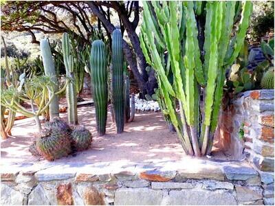 Jardinerie Hyères